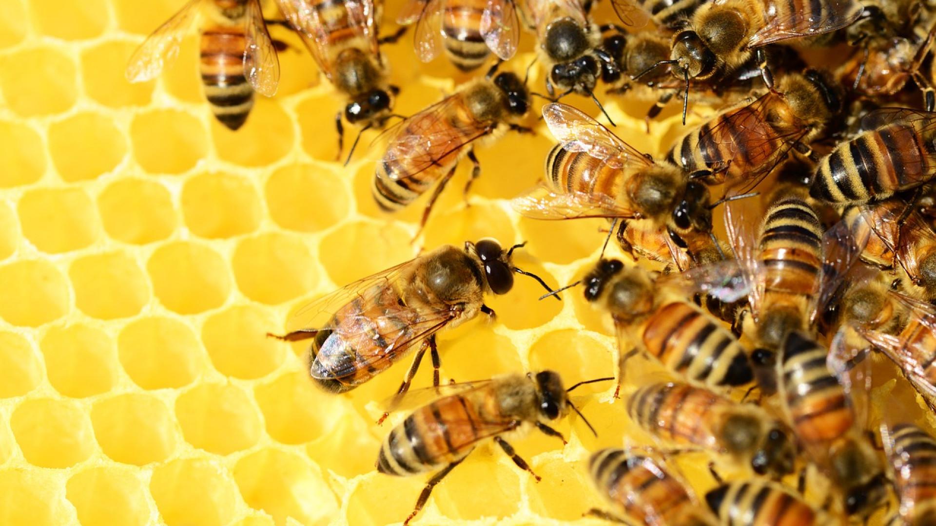 Le parrainage d'une colonie d'abeille